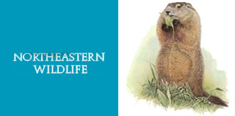 Northeastern Wildlife, Inc