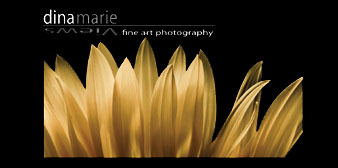 Dina Marie Views Fine Art Photography