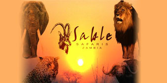 Cheetah Safaris/Sable Safaris
