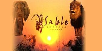 Cheetah Safaris/Sable Safaris