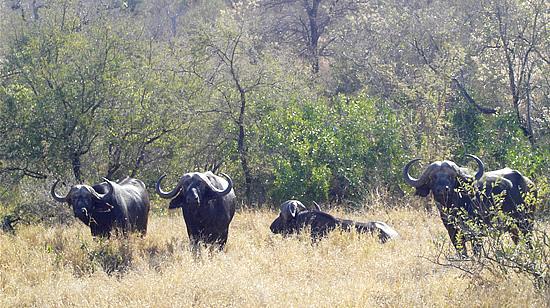 Grootpan Hunting Safaris