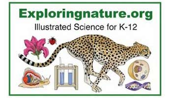 Illustrated Science Resources for K-12