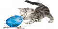 Find the Right Toy to Entertain Playful Cats